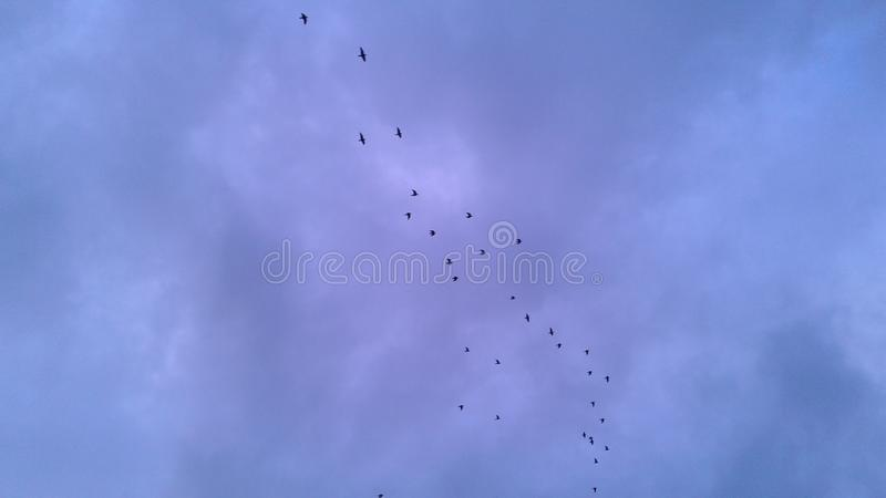 Flock of birds in sky. Cloudy, happymorning royalty free stock image