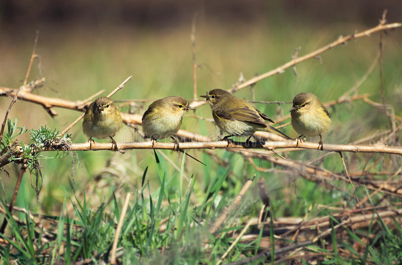 Flock of birds. In spring time. Natural background stock photography