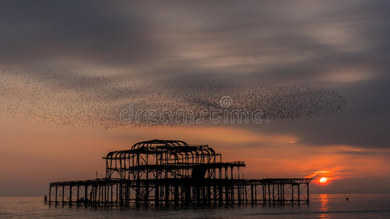 Download Flock Of Birds At Sunset Stock Photo - Image: 83713999