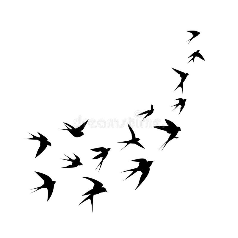 A flock of birds (swallows) go up. Black silhouette on a white background. royalty free illustration