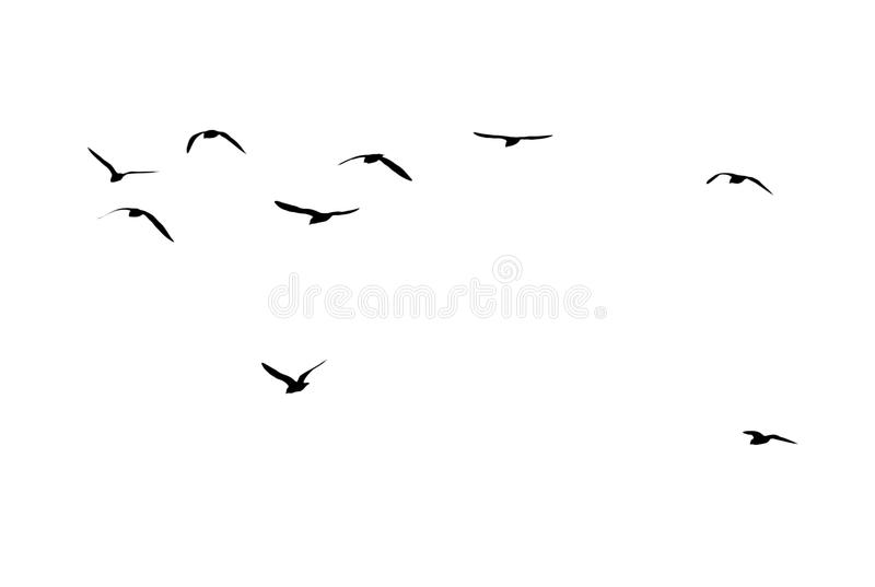 A flock of birds on a white background.  stock photos