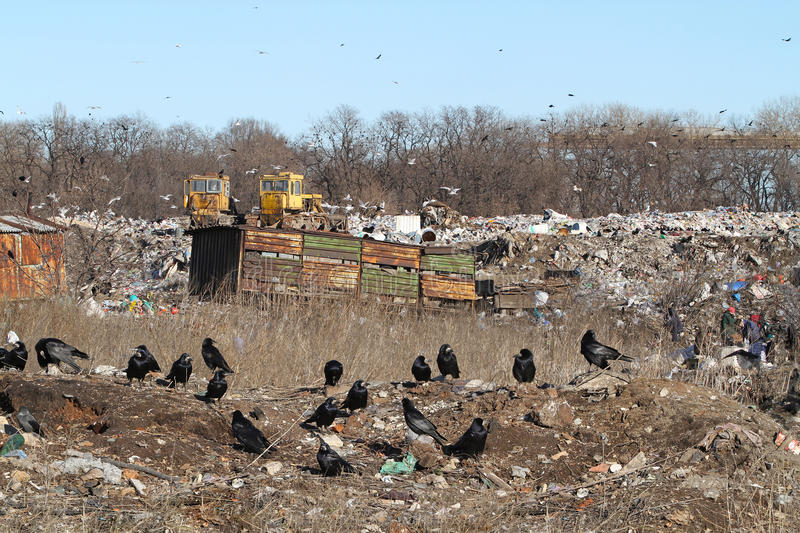 A flock of black crows on a city garbage dump. Dozers,. Poor people and crows dig in the mountains of human waste royalty free stock photography