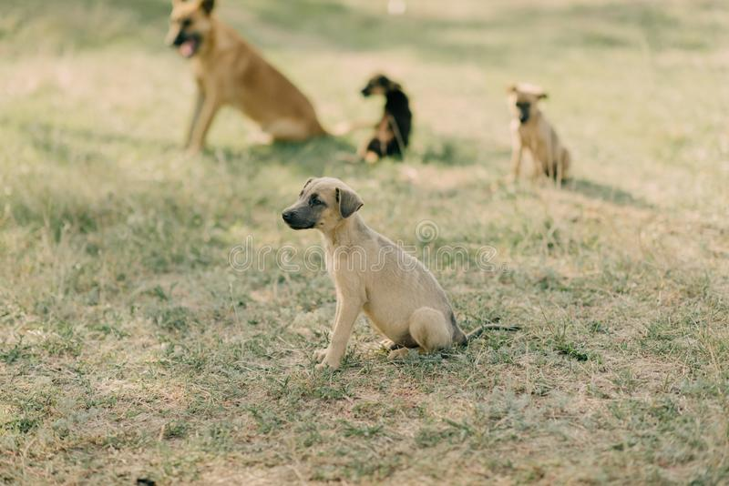 A flock of dogs royalty free stock photos