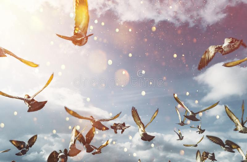 Flock Of Doves Flying In Blue Sunny Sky. Freedom Peace Concept royalty free stock photo