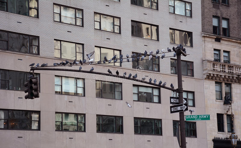 Flock Of Doves In Manhattan Royalty Free Stock Photos