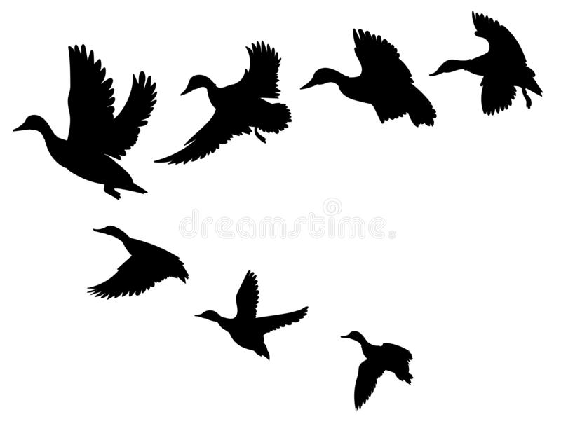 Flock of ducks. A cartoon flock of birds. Vector illustration of flying birds. Drawing for children. Flock of ducks. A cartoon flock of birds. Vector vector illustration