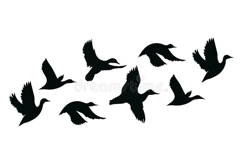 Flock of ducks. A cartoon flock of birds. Vector illustration of flying birds. Drawing for children. Flock of ducks. A cartoon flock of birds. Vector royalty free illustration