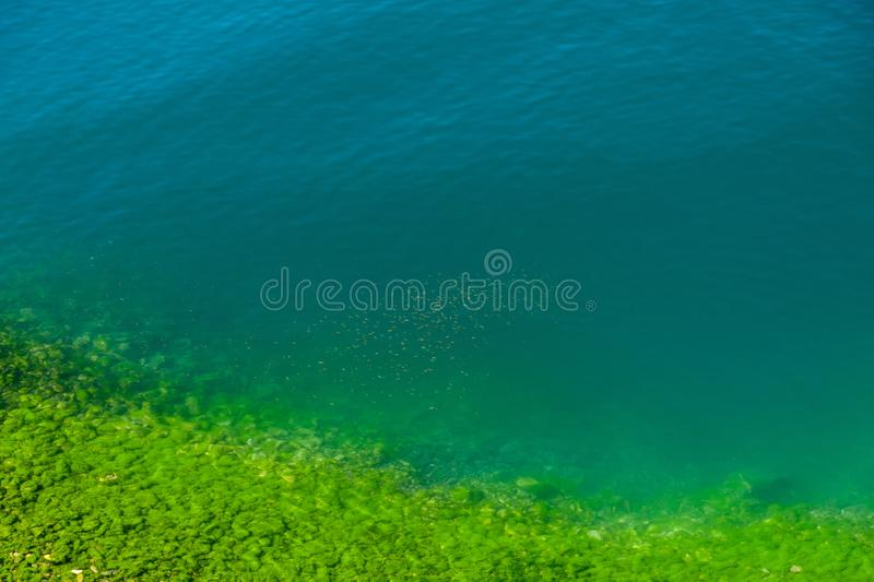 A flock of fish in beautiful greenish-blue water with a stony silt covered rocky shore stock photography