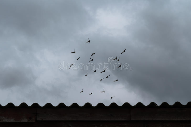 Flock of flying pigeons under dramatic sky stock image