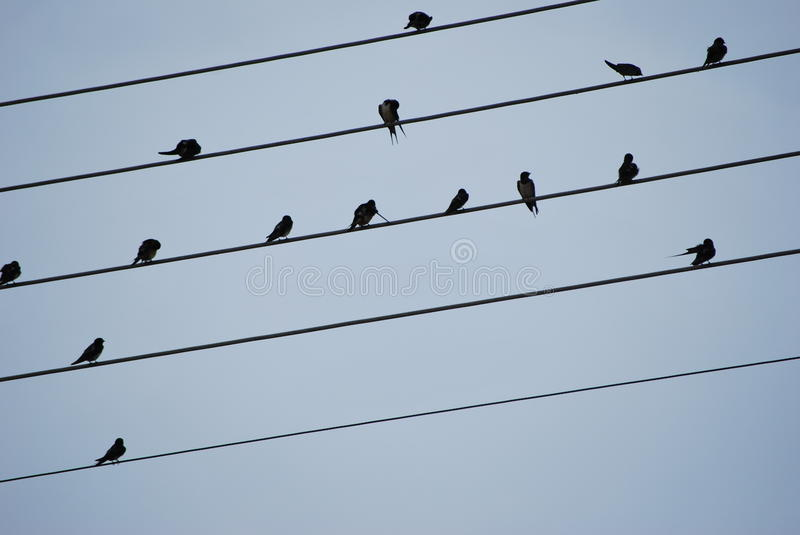 Flock royalty free stock photography