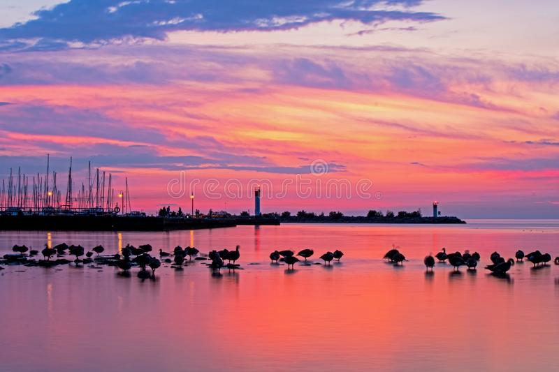 Flock Of Geese At Sunrise On Lake Ontario stock photography