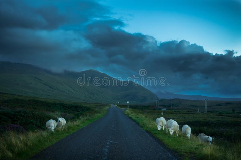 Flock Of Grazing Sheep And Lamb Beneath Lonesome Single Track Road Through Mountain Landscape Near Rhiconich In Scotland stock photos