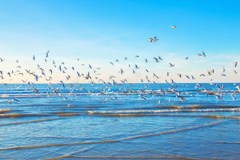 A flock of gulls over the sea royalty free stock photos