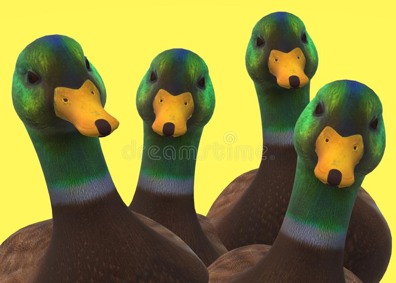 A flock of identical male mandarin wood ducks against a yellow backdrop. A computer generated illustration image of a flock of identical male mandarin wood ducks vector illustration