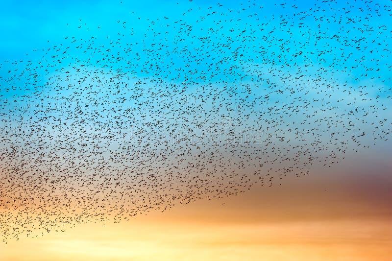 Flock of many birds royalty free stock photos