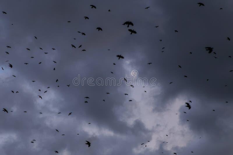 Epic Storm blue sky, dark grey clouds background textureFlock of black raven birds against storm sky with dark grey clouds. Flock of many black raven birds stock photo