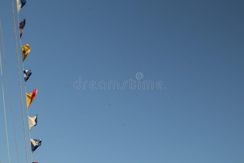 A flock of many seagulls flying high royalty free stock photography