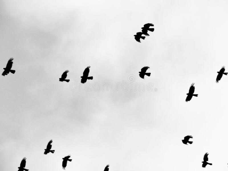 Flock of migrating birds flying in the sky stock photography