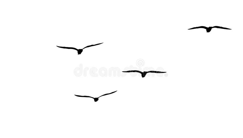 flock royalty free stock photo