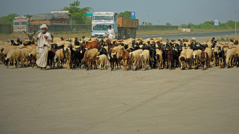 Download Flock Near The Roadside Editorial Photo - Image: 83704151