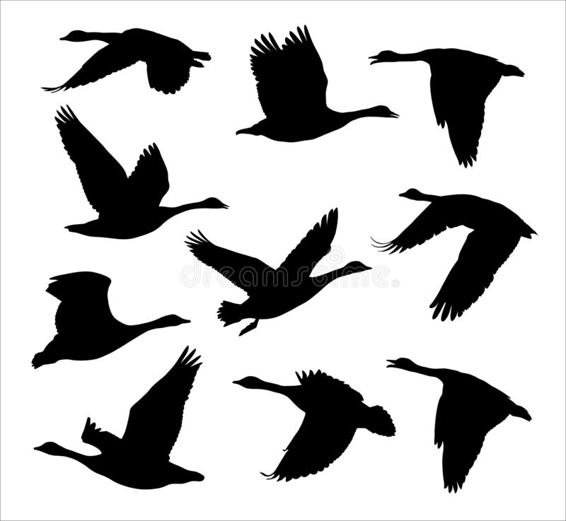 Free Flock Of Flying Canadian Geese Canada Goose Royalty Free Stock Photography - 147380117