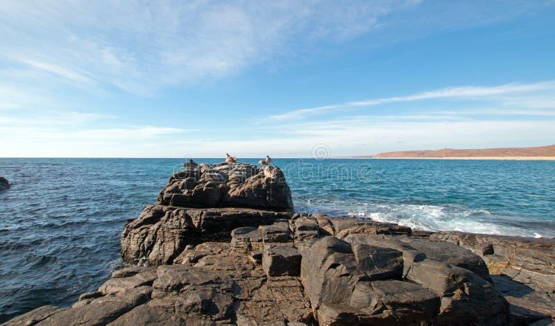 Flock of Pelicans on rock at Cerritos Beach on Punta Lobos in Baja California Mexico. BCS stock photography