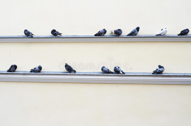 Download Flock Of Pigeons Sitting On The Ledge Of The Building Stock Photo - Image: 29033376