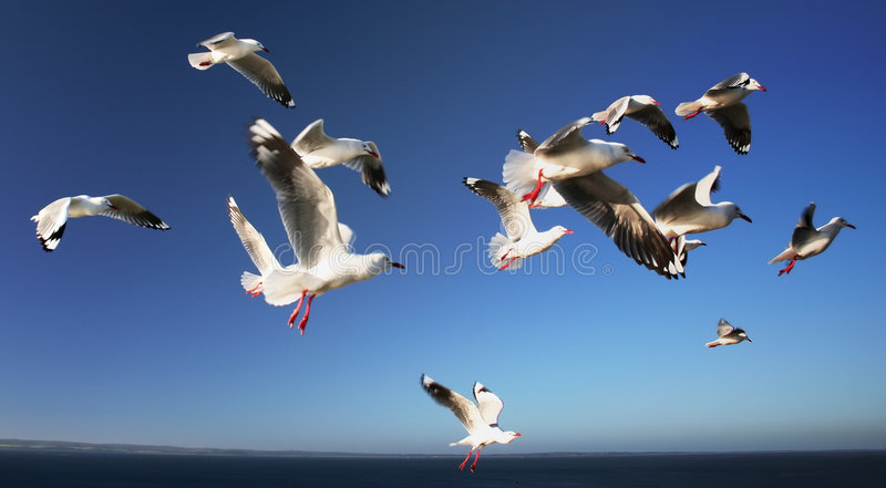 Download A Flock of Seagulls 2 stock image. Image of birds, flock - 6665081
