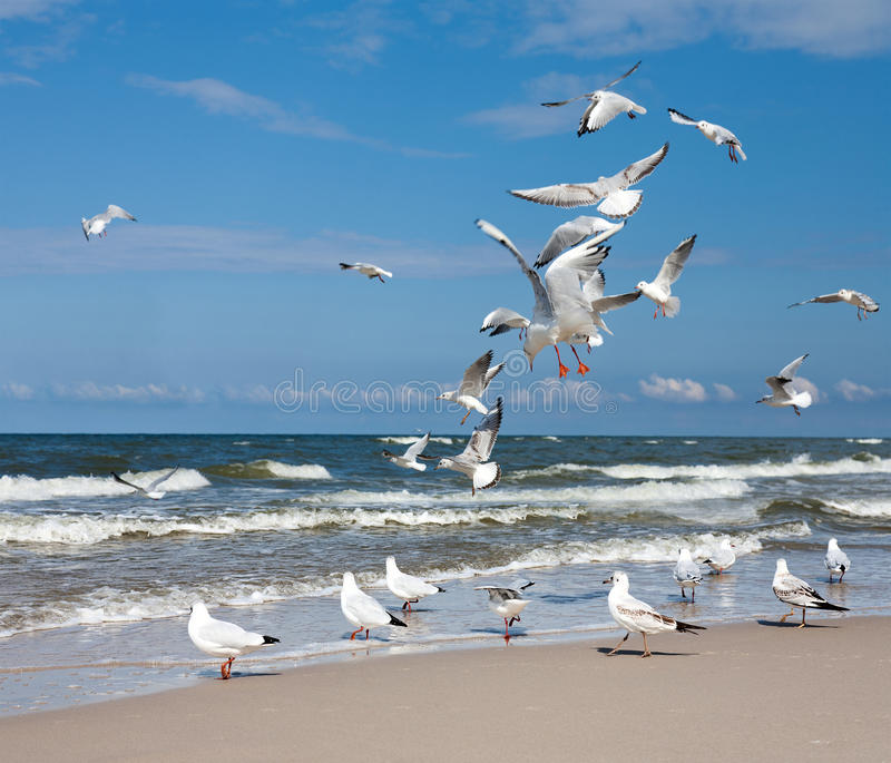 A Flock of Seagulls royalty free stock photography