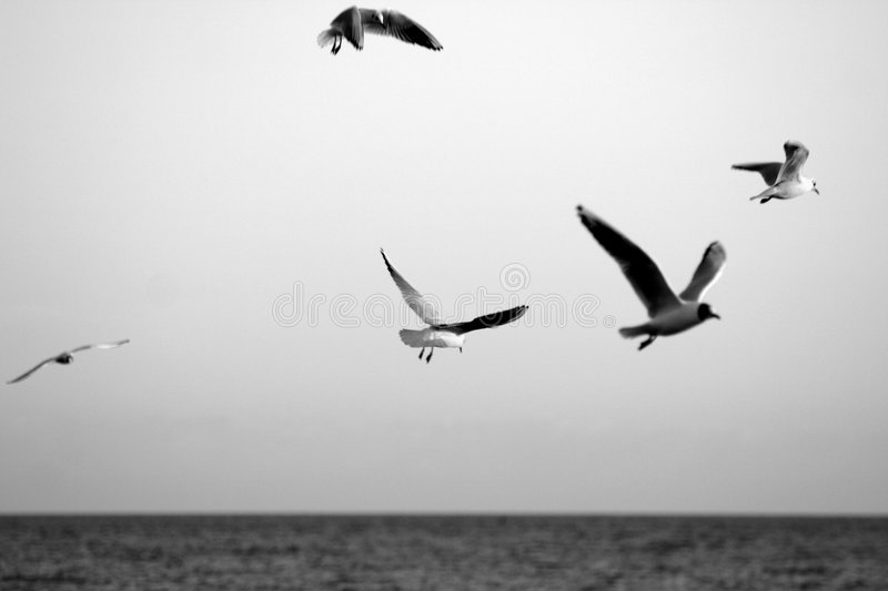 A flock of seagulls stock image