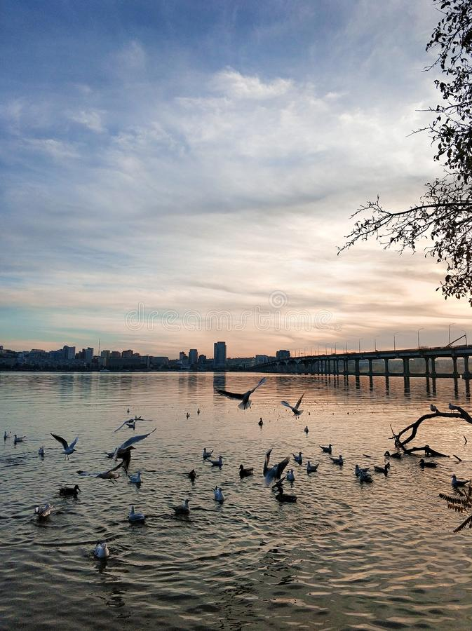 A flock of seagulls on the banks of the city river stock photo
