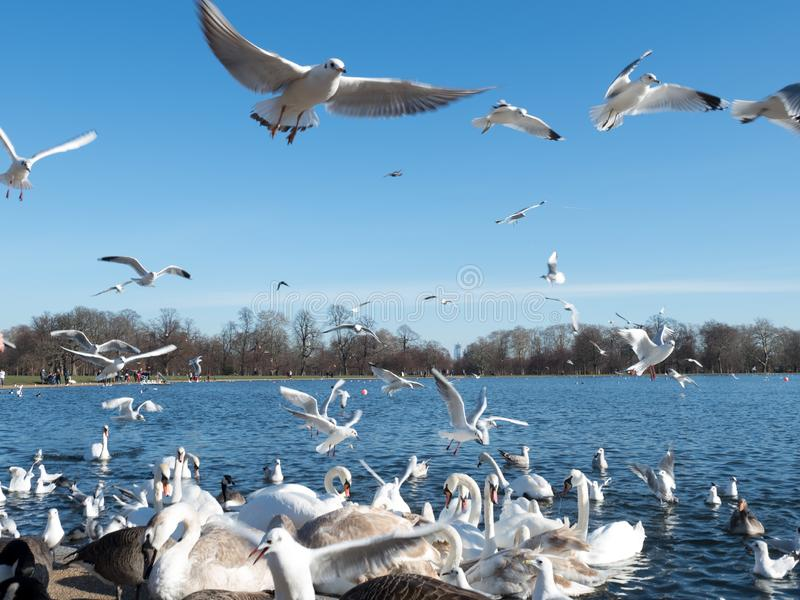 A flock of seagulls flying against blue sky stock images