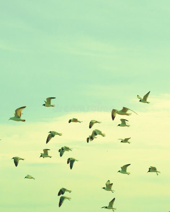 Flock of seagulls royalty free stock photos