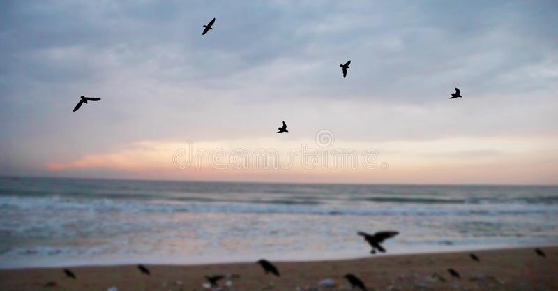 Flock of seagulls flying over sea. stock photo