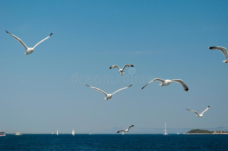 Flock of seagulls flying over sea stock image