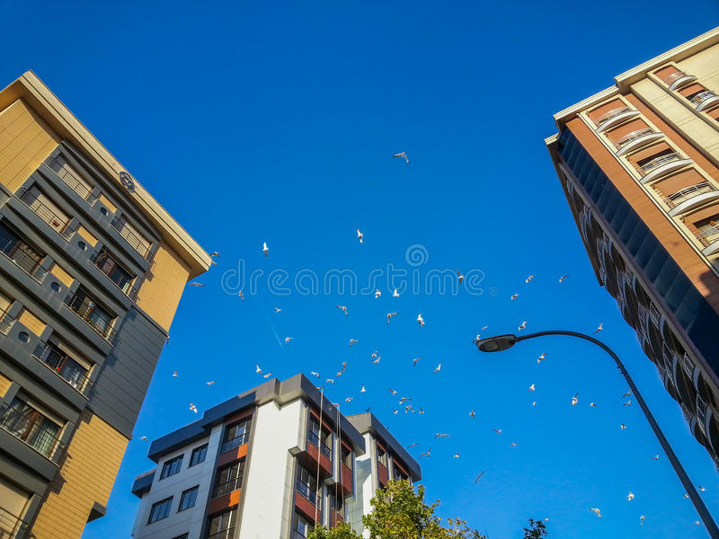 Flock of seagulls hovering in the blue sky royalty free stock images