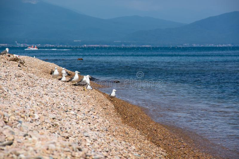Flock of seagulls on a sea shore. stock photography