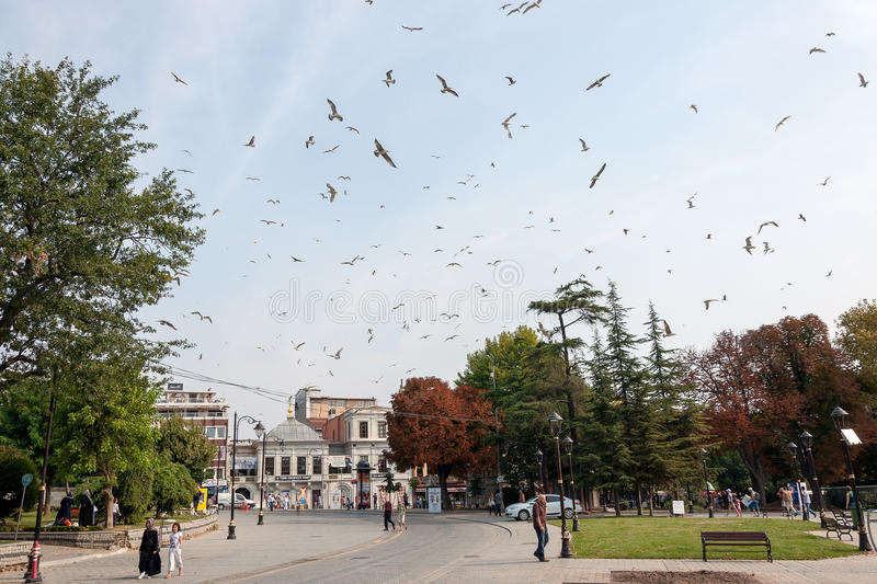 Flock of seagulls on the streets of Istanbul, Turkey. Flock of seagulls flying above the streets of Istanbul, Turkey with several tourists and local residents royalty free stock photo