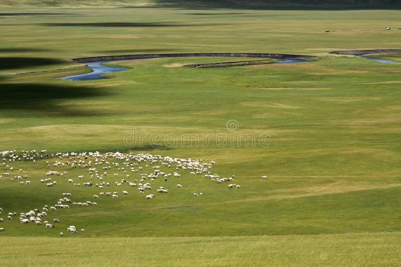 Download Flock of sheep stock image. Image of grass, sheep, background - 26663109