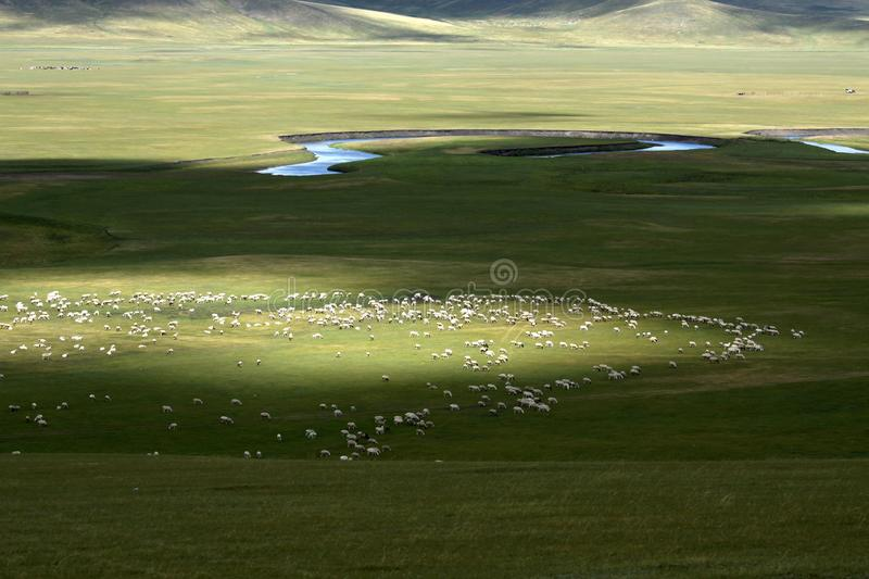 Download Flock of sheep stock image. Image of landscape, mountain - 26663171