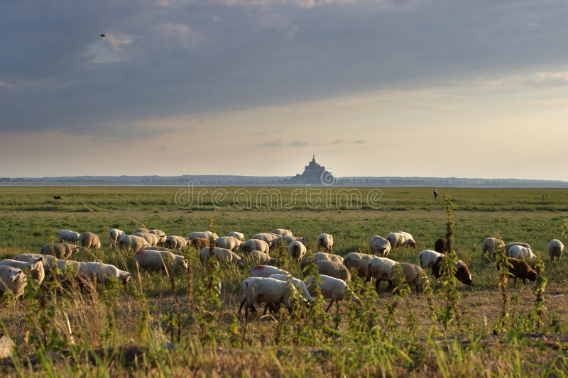 Flock Of Sheep In Countryside Stock Photography