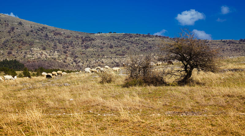 Download Flock Of Sheep Royalty Free Stock Images - Image: 30357379