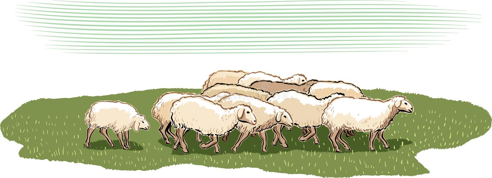 Flock of sheep. In a meadow vector illustration