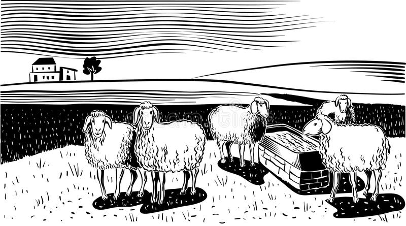 Flock of sheep. Sheep near watering hole, in a landscape vector illustration