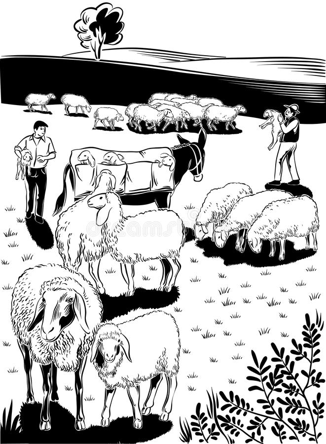 Flock of sheep. Shepherds, mule and lambs royalty free illustration