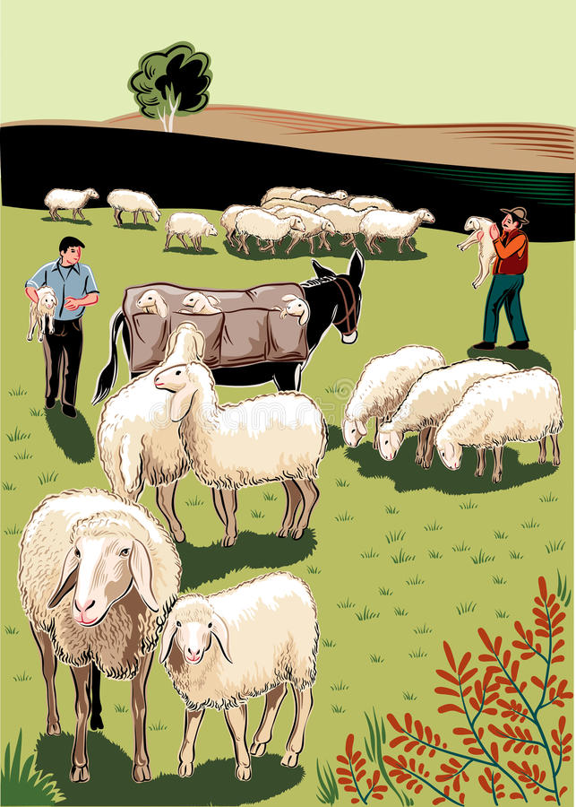 Flock of sheep. Shepherds, mule and lambs vector illustration