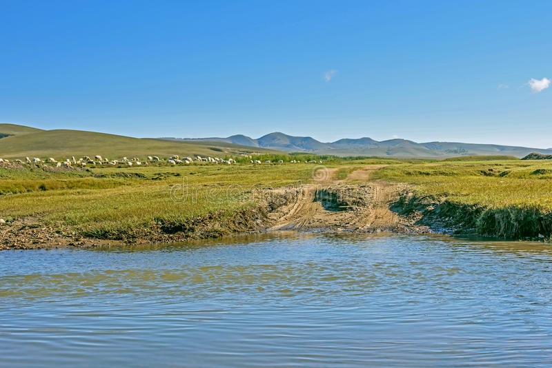 A flock of sheep on The vast grassland and stream stock image