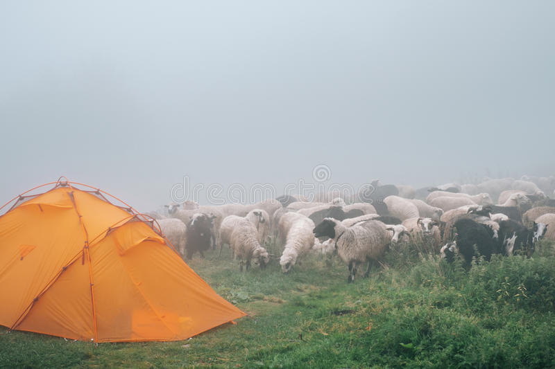Download Flock Of Ships Near Camp In Foggy Mountains Stock Image - Image: 83702441