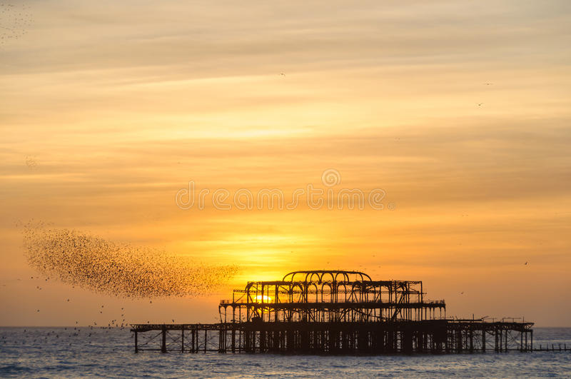 Flock of starlings over the west pier in Brighton. Flock of starlings flying over the west pier in Brighton, UK royalty free stock photos