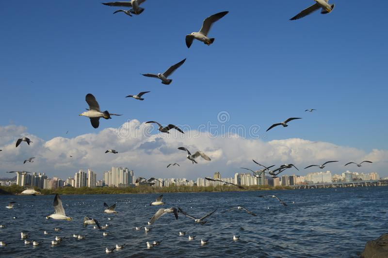 Flock Of White Birds Flying royalty free stock photography
